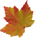 AutumnLeaf08.jpg