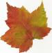 AutumnLeaf11.jpg