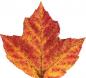 AutumnLeaf12.jpg