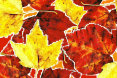 AutumnLeaves04.jpg