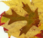 AutumnLeaves07.jpg