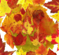 AutumnLeaves13.jpg