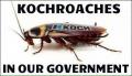 Kochroaches.jpg