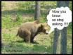 bear poop in woods
