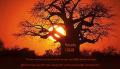 Sun behind leafless tree_Fotor.jpg