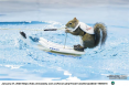 Squirrel Water Skis in China