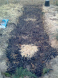 ash layer