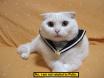 Putin Kitty