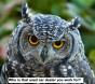 Owl disbeleif