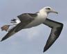 Layson Albatross 2
