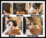 Kitties Sep 22 2014