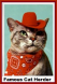 Kitty Cat herder cowboy