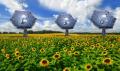 IBM Sunflower