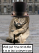English gent Kitty