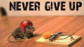Agelbert Never Give Up mouse motto
