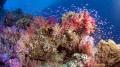 Melvin_Moncrieff_Reefblog
