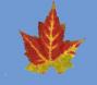 AutumnLeaf04.jpg