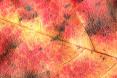 AutumnLeaf02.jpg