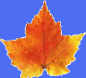 AutumnLeaf05.jpg