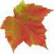 AutumnLeaf07.jpg