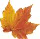 AutumnLeaf09.jpg