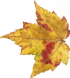 AutumnLeaf10.jpg