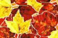 AutumnLeaves04.jpg