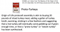 Proto-Turkey