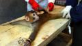 Monkey being tortured.jpg