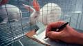 Rabbit in cage.jpg