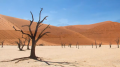 Desert Growing in Namibia