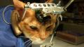 tortured cat