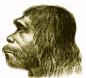 facial reconstruction 1