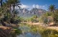 Strange Socotra
